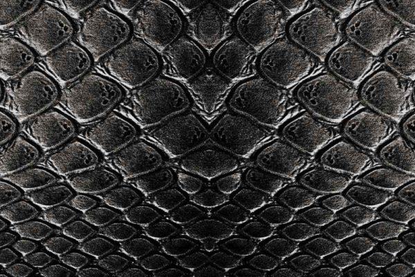 krokodyl_1