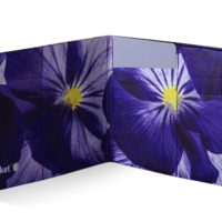 Spocket_C_plus_Pansies_2